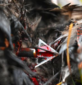 broadheads for elk